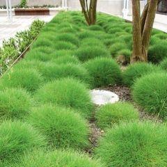 Goedkope tuinplanten online